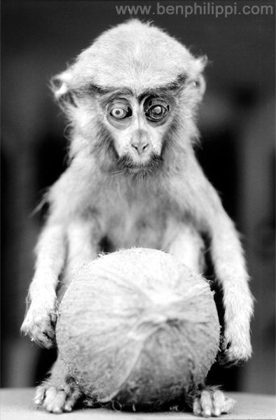 Stuffed Monkey. Ghana, West Afica
